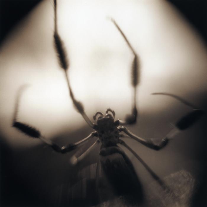 Banana Spider #3, 2006