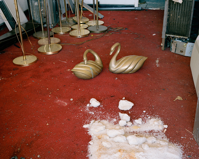 Bronze Swans