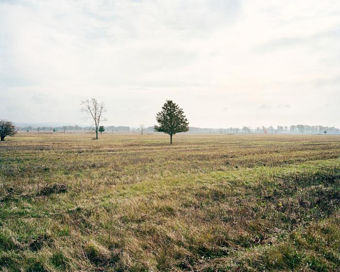 Grassland 433
