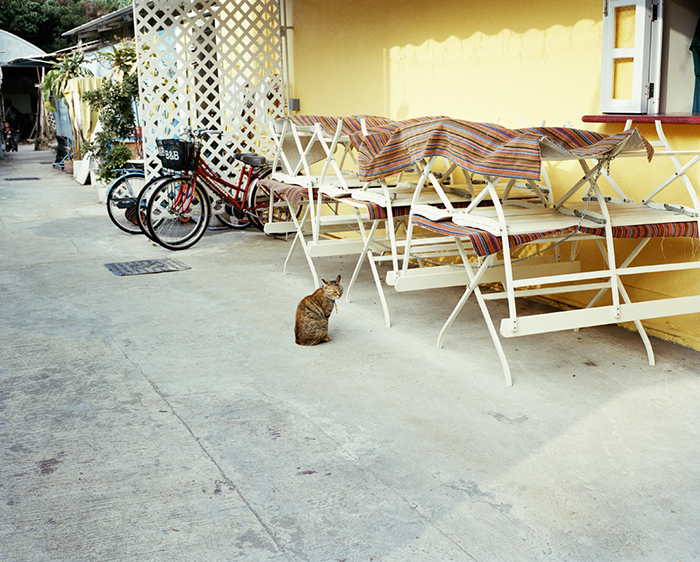 Cat in the Middle, Cheung Chau, 2010