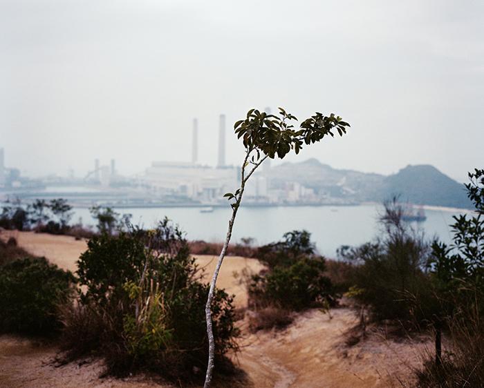 Branch, Lamma Island, 2010