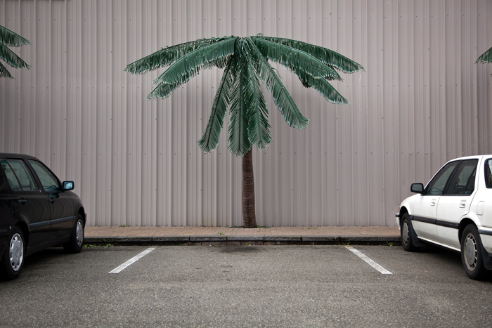 Parking Lot Palm Tree