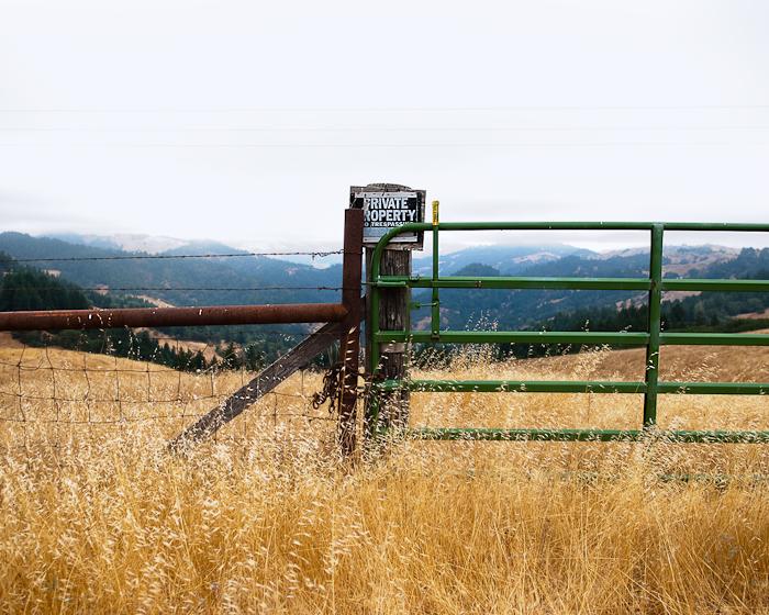 Grassland by H Lee