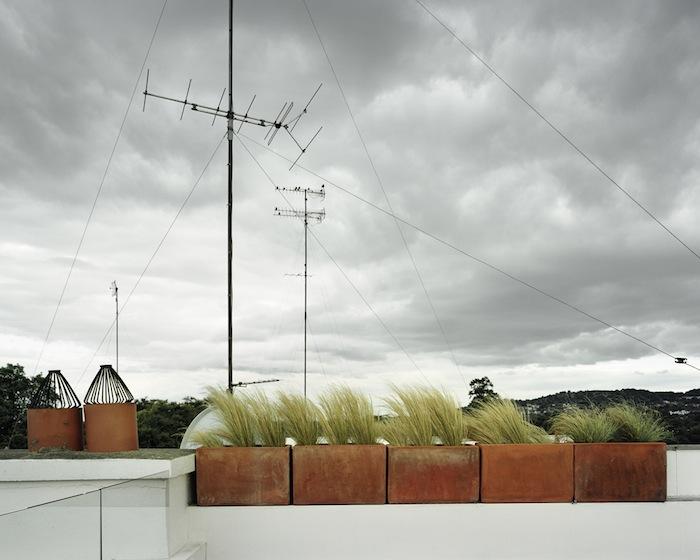 Birds-Dun-Laoghrie-2009.jpg