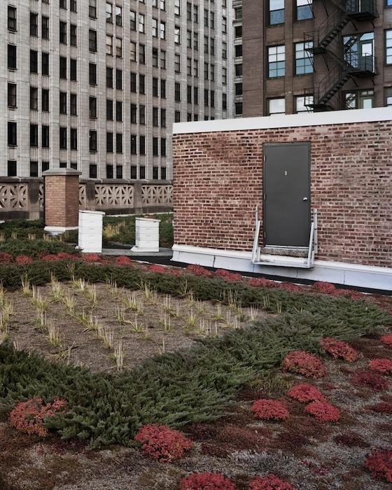 Squares-Chicago-2009.jpg