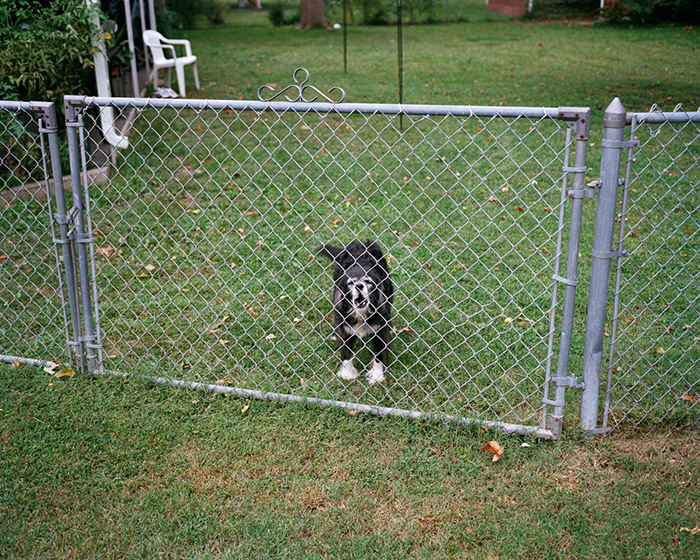 Neighbor's Dog, 2009