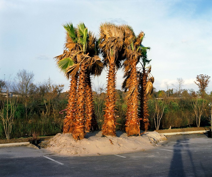 Palm Trees in Parking Lot, BRLA 2008