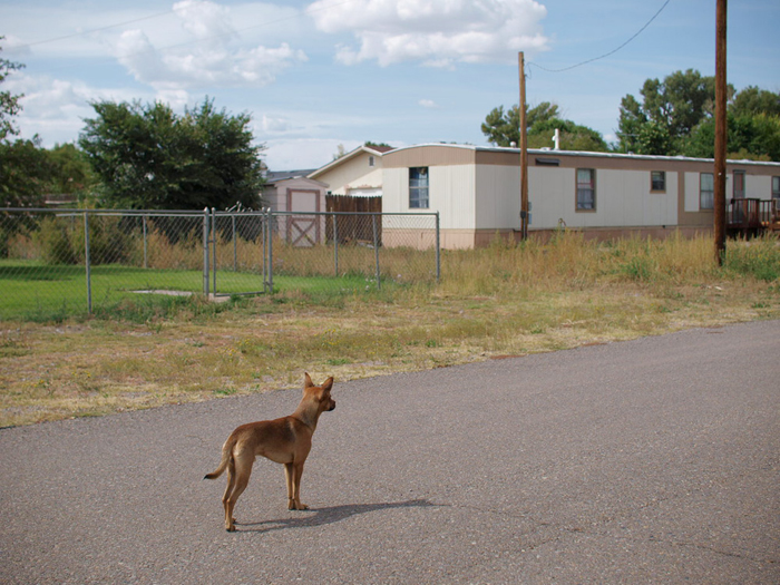 A chihuahua in the middle of the street