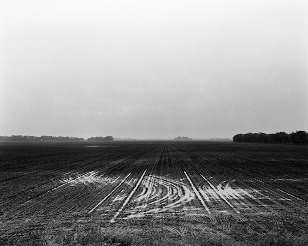field_pinto_rain.jpg