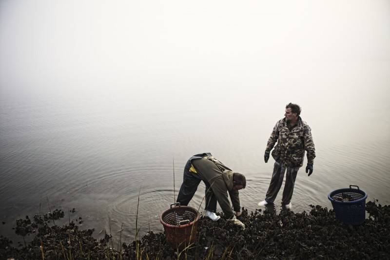 Jody Horton (Austin, TX)  Oyster Picking 1, 2013  From the series Oyster Picking