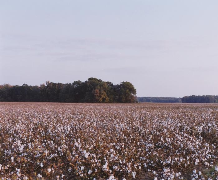 Lafayette County