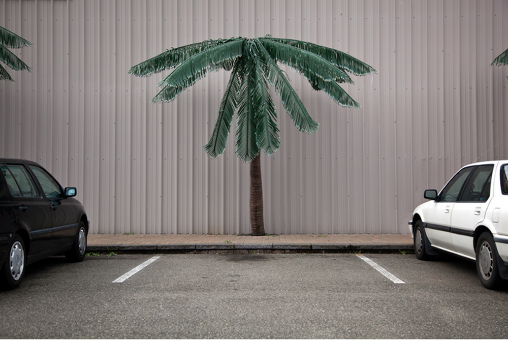 Parking Lot Palm Tree  by Geoffrey Ellis