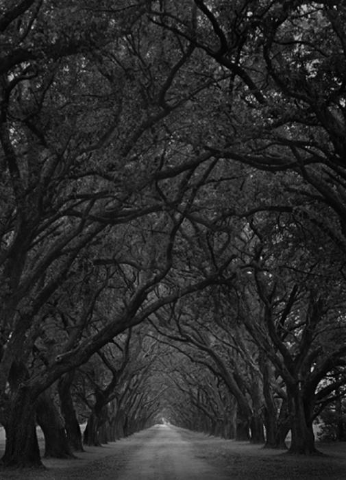 Oak Grove, 2002
