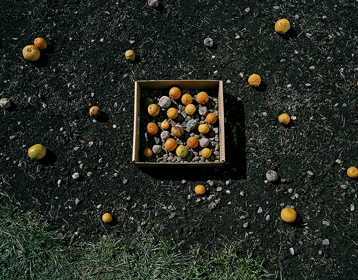 "David Wolf  ""Oranges and Stones"""