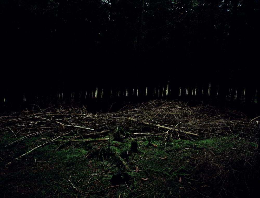 02.Feugère-Dead wood.jpg