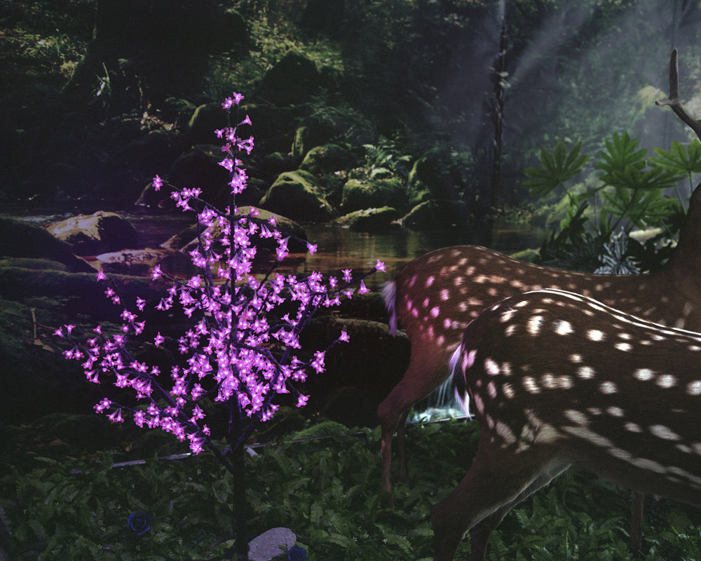 Deer Forest