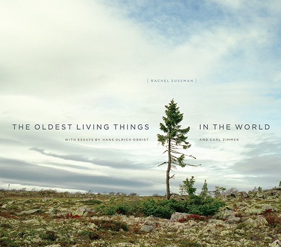 Leo Hsu reviews  The Oldest Living Things in the World  by Rachel Sussman