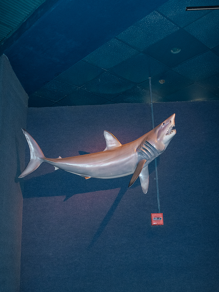 A Floating Shark
