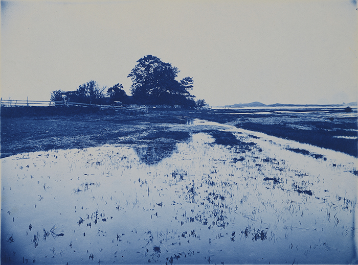 Arthur Wesley Dow (American, 1857-1922) Untitled, ca. 1895 Cyanotype. 5 7/8 x 8 in. Gift of Joan and Van Deren Coke, 91.11.61