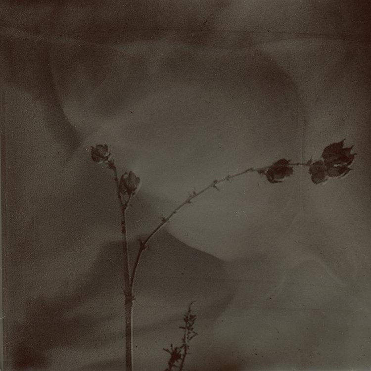 desert+flower.jpg