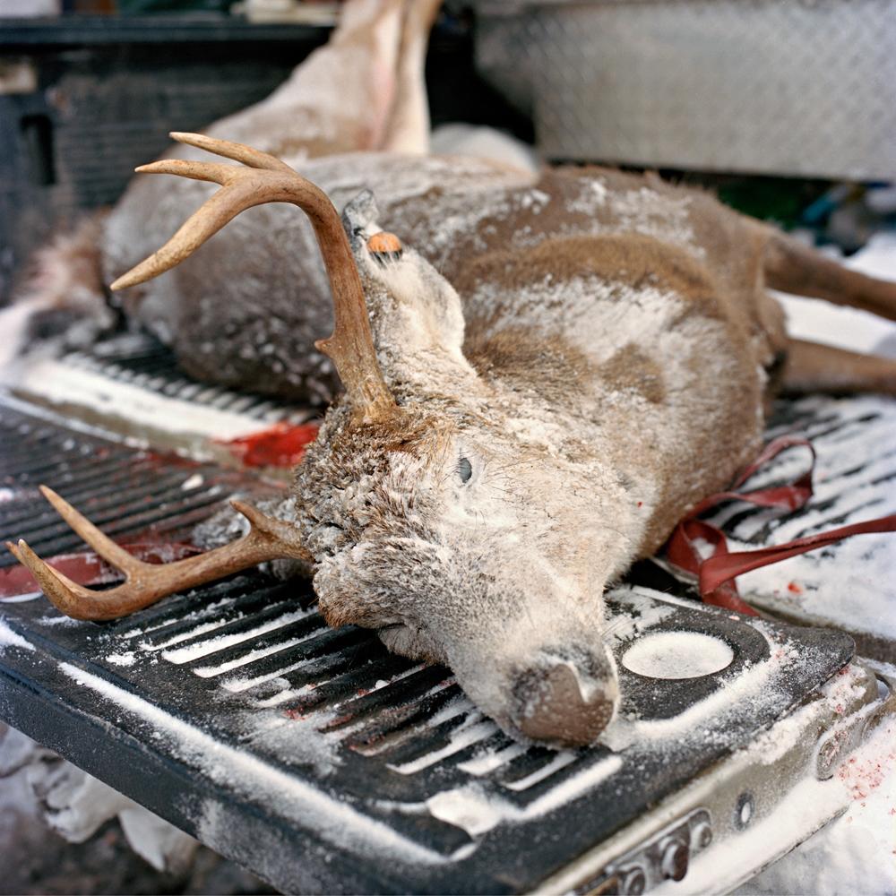 Dead Buck