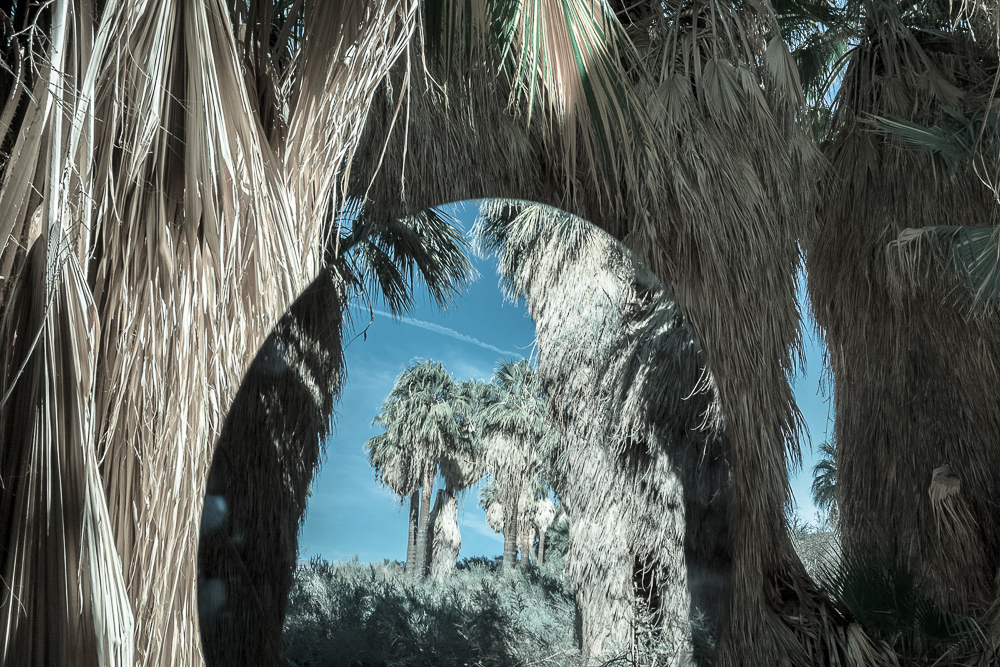 Palms Portal