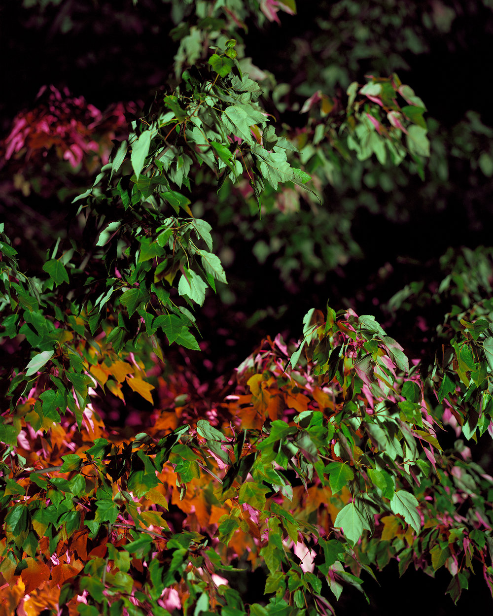 laurabethreese35.jpg