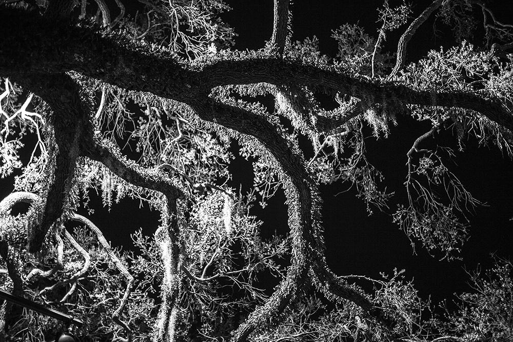 Tree at Night, Savannah, GA
