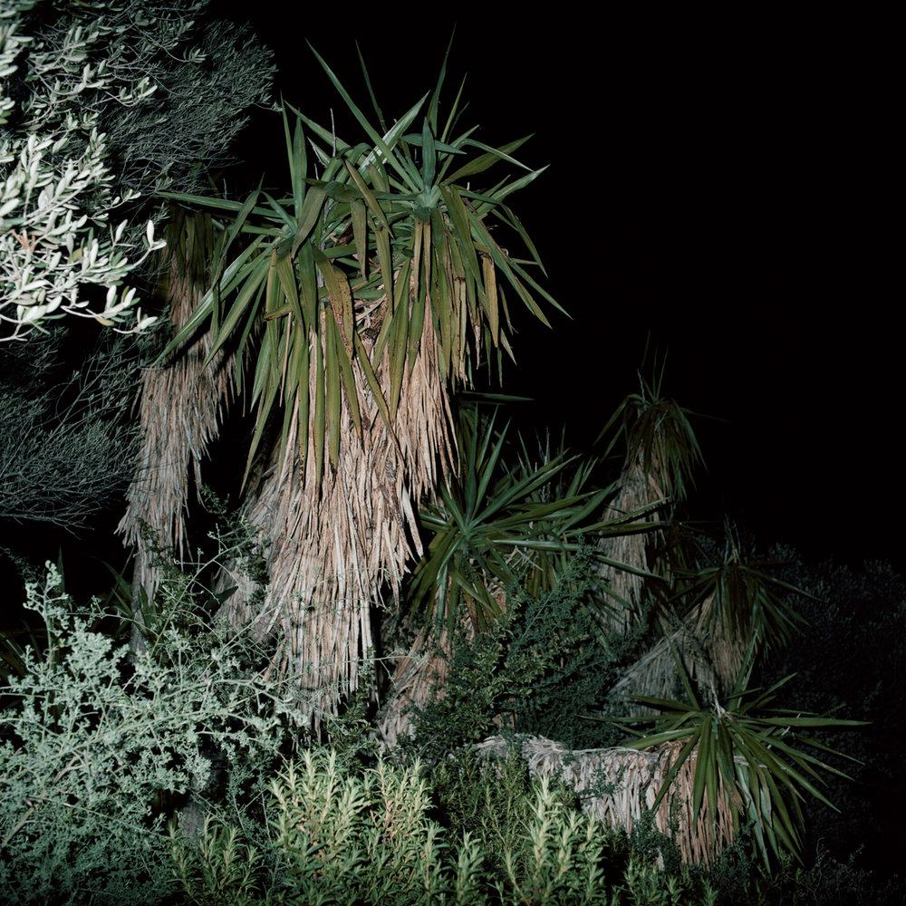 Cactus cemetery