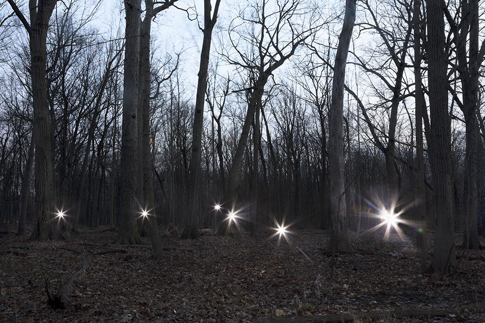 Orbs in Forest, 2017 © Barbara Diener