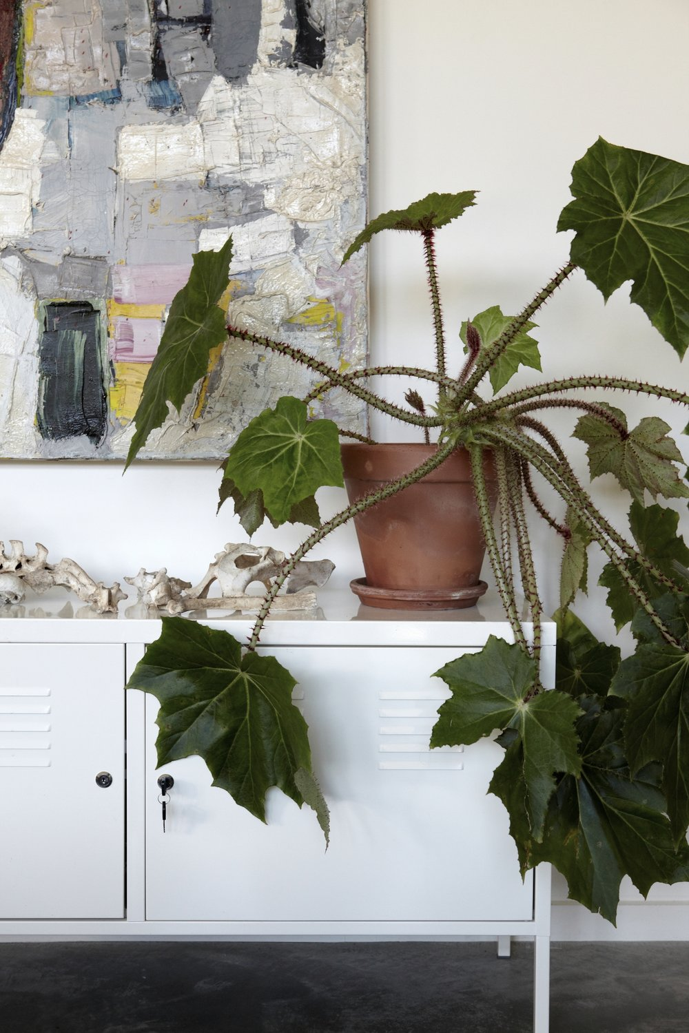 Confluence House Plant and Credenza Detail
