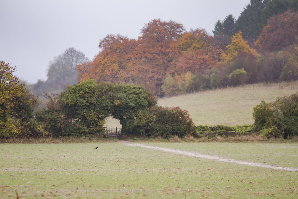 Oxfordshire ridgeway blogger walk 1