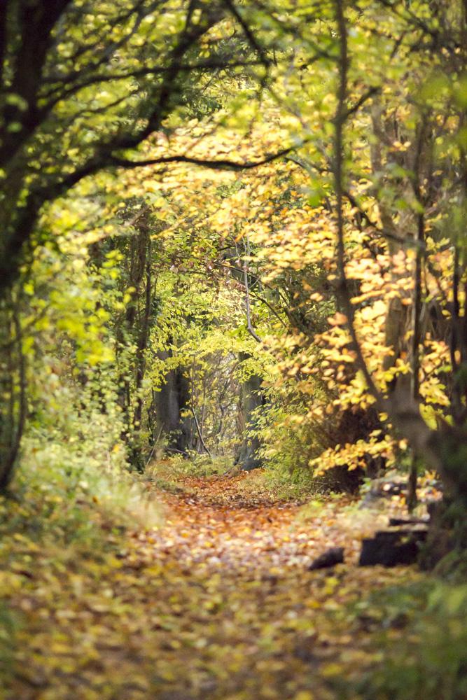 Oxfordshire ridgeway blogger walk 13