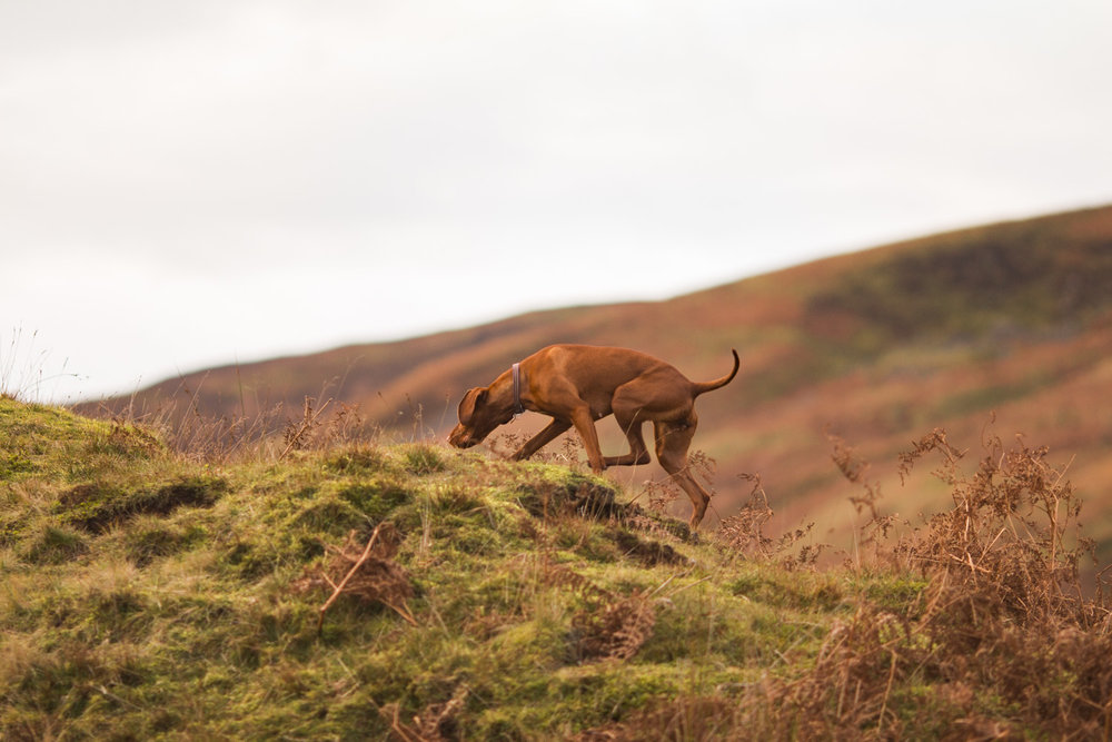 Trough of Bowland uk breaks 15 vizsla aura
