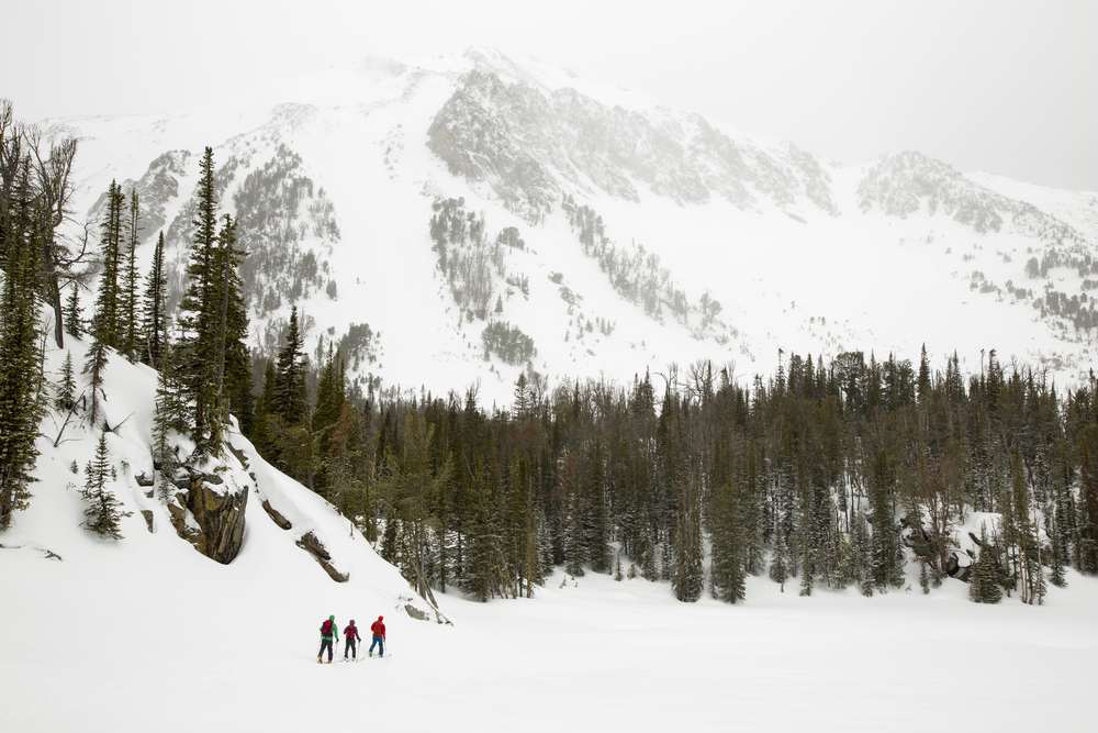Guided backcountry powder skiing and snowboarding.
