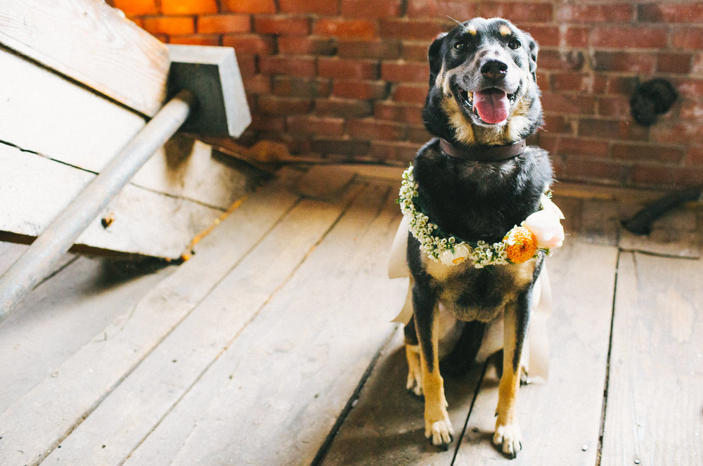 the bride and groom's dog wears a flower crown made by broadturn farm