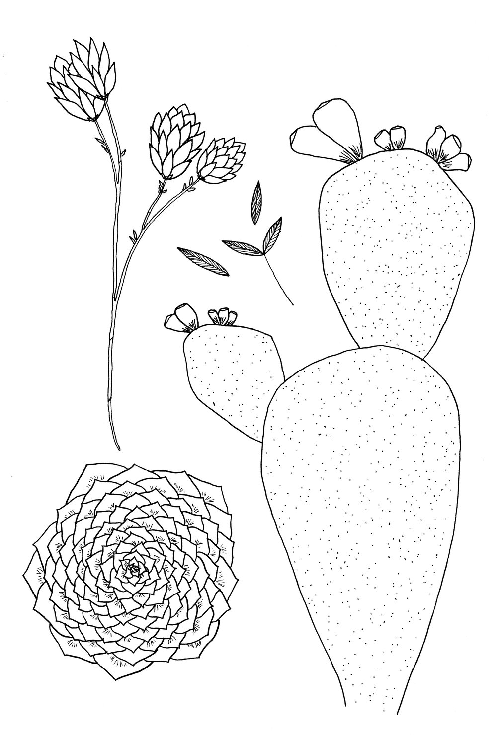 plants 3 new.jpg