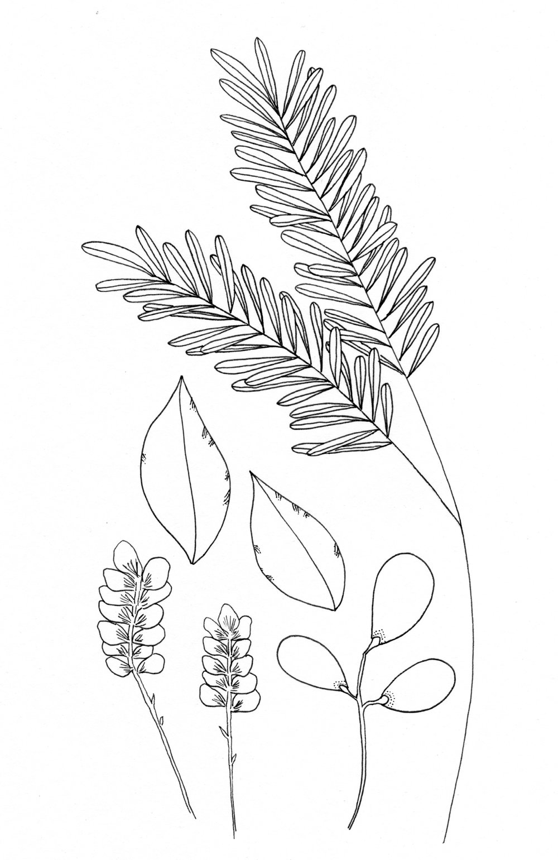 plants study 1.jpg