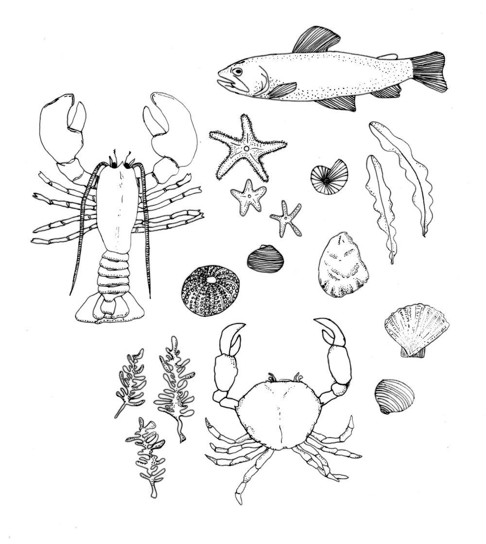 ocean illustration.jpg