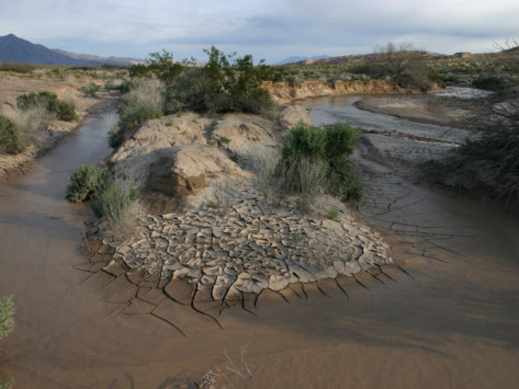 marli-miller-amargosa-river-and-its-riparian-habitat-and-erosion-pattern-mojave-desert-california-usa.jpg