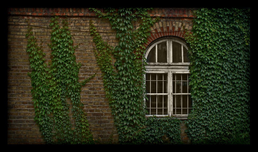Ivy_Wall_by_O_r_c_h_i_d_e_a.jpg