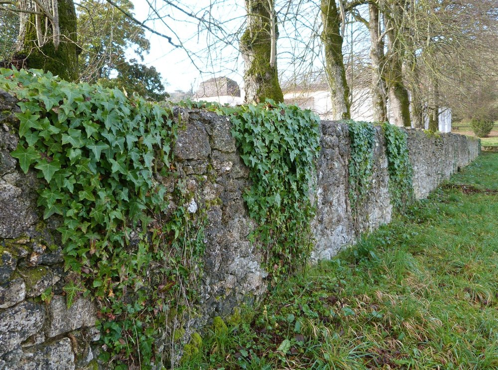 Ivy-on-Tilleul-Wall-hi-lg.jpg