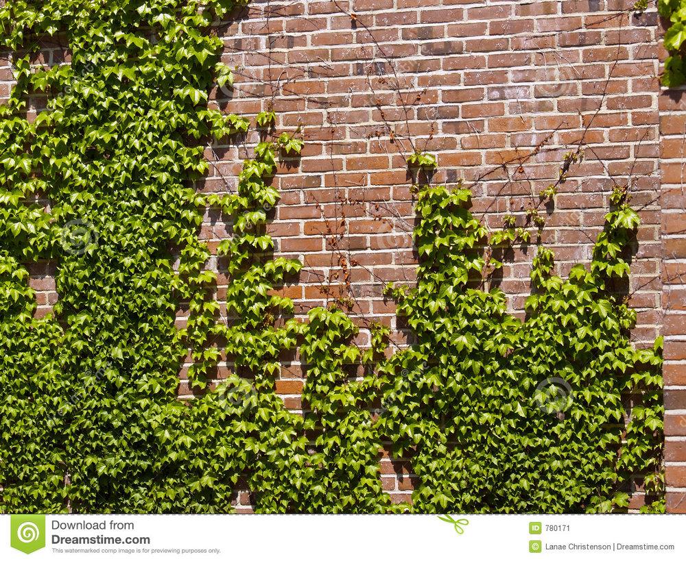 ivy-wall-780171.jpg