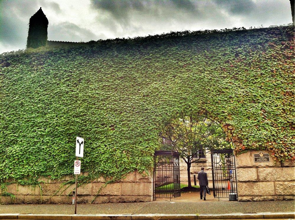 ivy-wall.jpg
