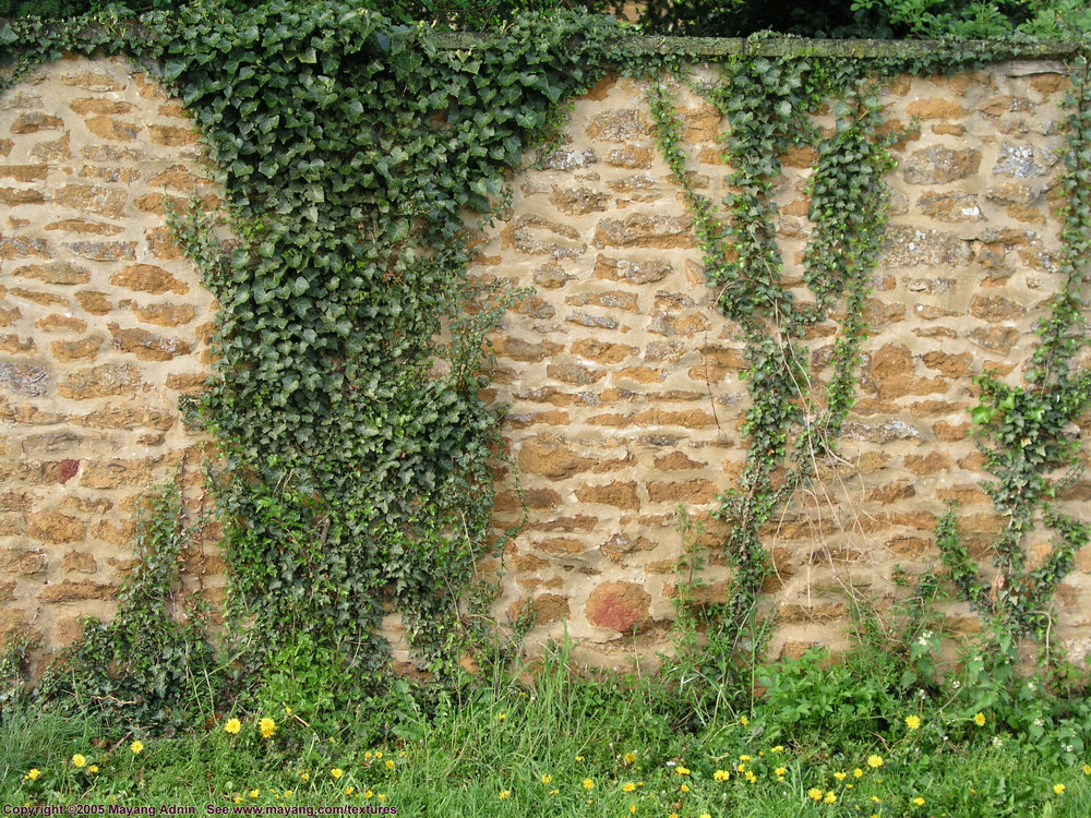 stone_wall_with_ivy_4193160.JPG