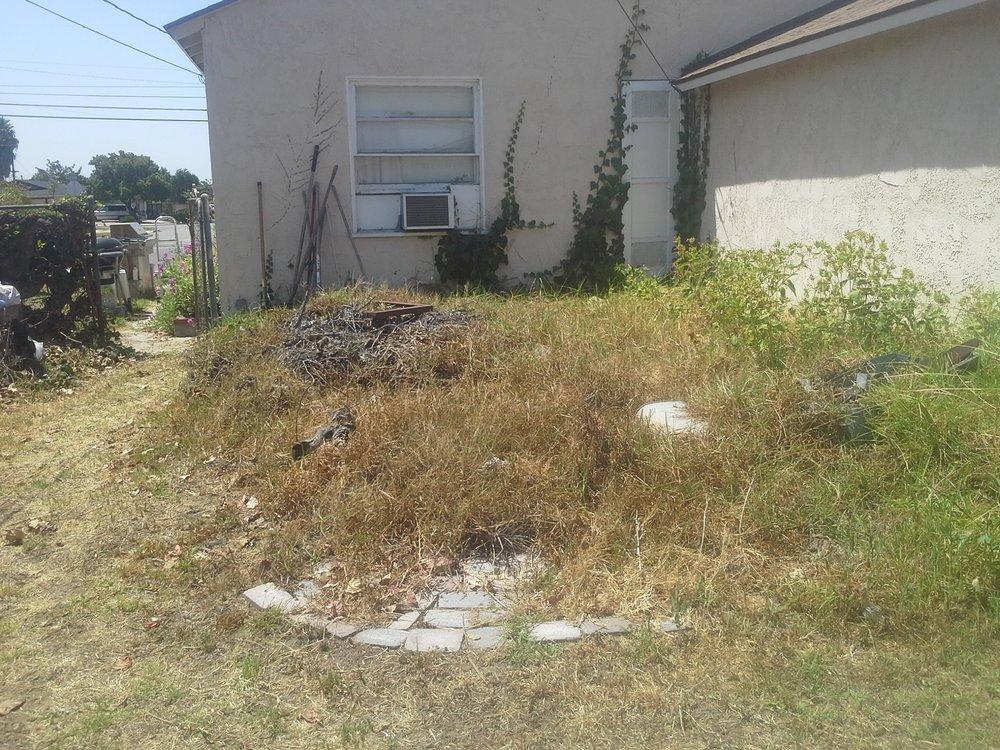 weedsinstoneflooring.jpg