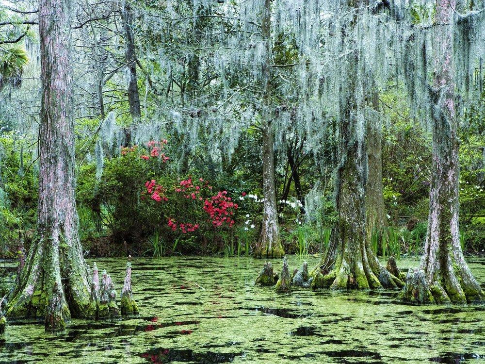 moss-contrasts.jpg
