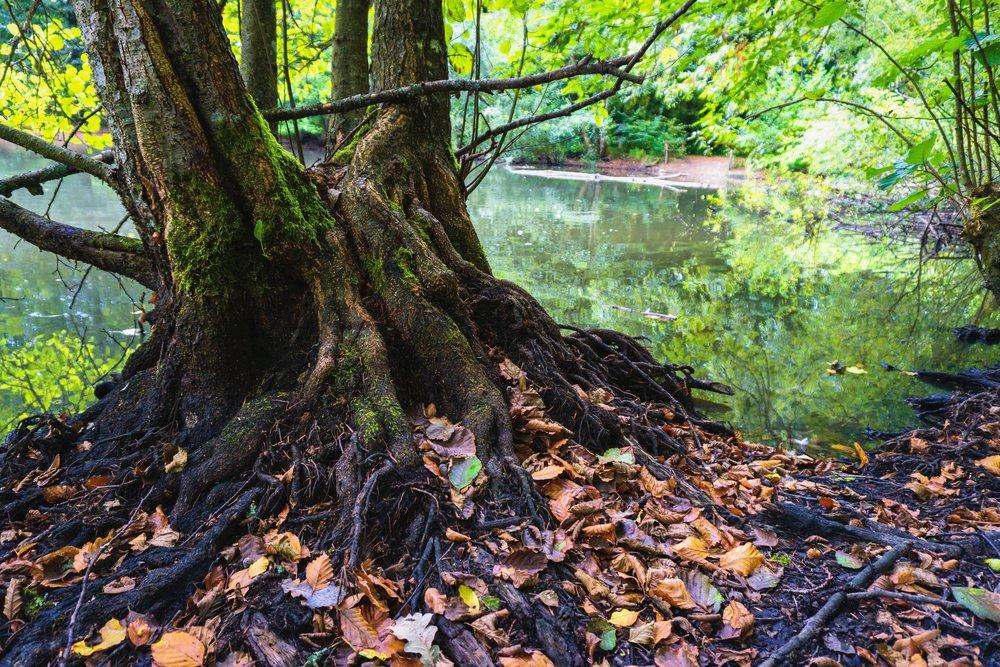 autumn-autumn-leaves-bark-1383707.jpg