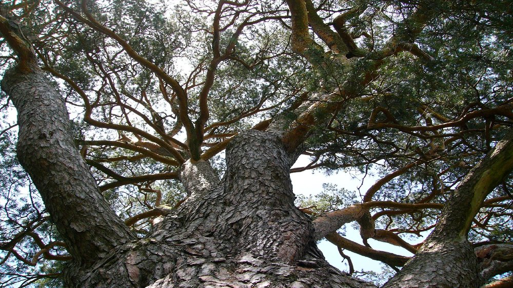 2560x1440-branches-of-a-tree.jpg