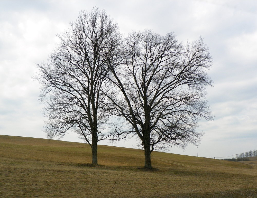 two-trees-bare-trees-stock-nature-wallpaper.jpg